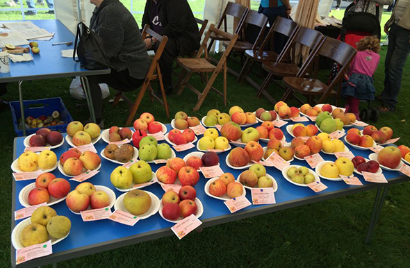 apple tasting at the apple festival